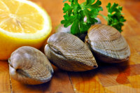 clams recipes