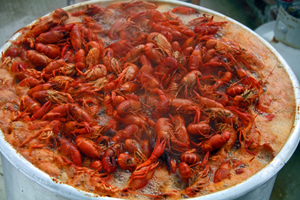 Collection of louisiana recipes