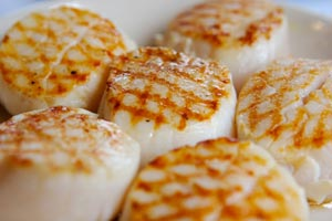 Collection of scallops recipes