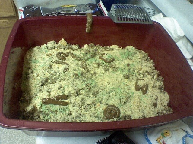 Halloween Kitty Litter Cake Recipe Cdkitchen Com